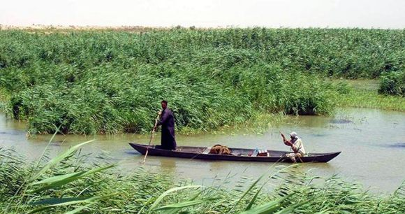 Mesopotamia National Park Iraq by jivvi, Wikimedia Commons