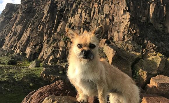 Gobi the dog by @findinggobi