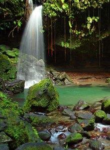 Waterfall into an emerald pool by Celia Sorhaindo Tropical Ties