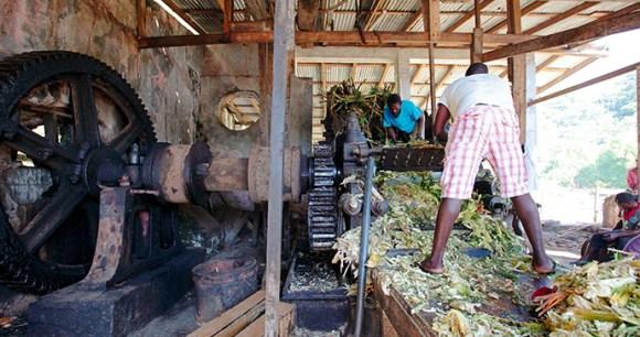 River Antoine Rum Distillery Grenada by Paul Crask