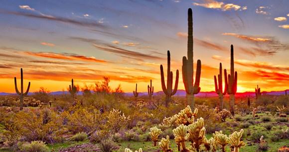 Sonoran Desert Maricopa Sunset Limited USA by Anton Foltin, Shutterstock