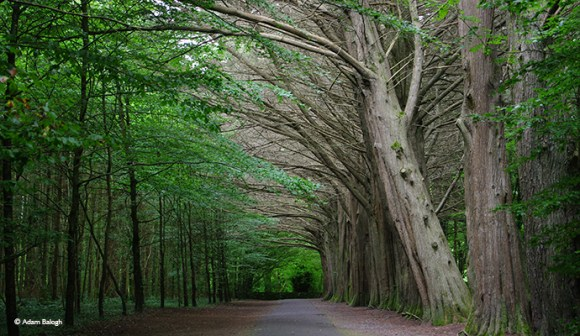Coole Park, Gort, Ireland Adam Balogh
