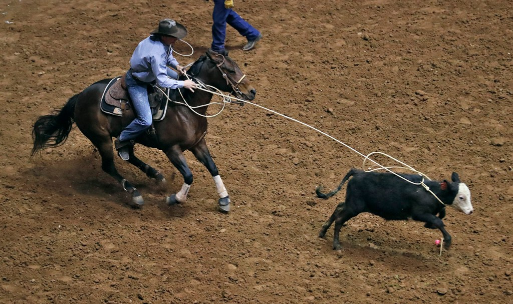 Kody Mahaffey, from Sweetwater, ropes a steer in the tie down roping competition during the ABC Pro Rodeo, Saturday, March 31, 2018, at Municipal Coliseum in Lubbock, Texas. [Brad Tollefson/A-J Media]