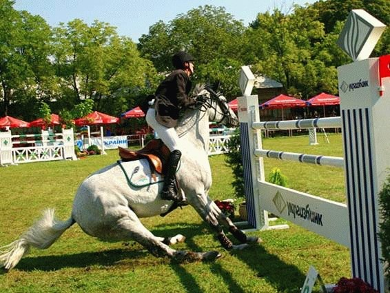 balking horse before the jump hesitate