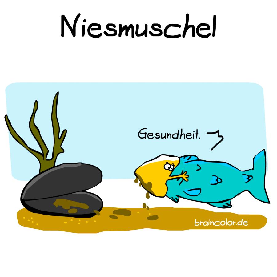 miesmuschel