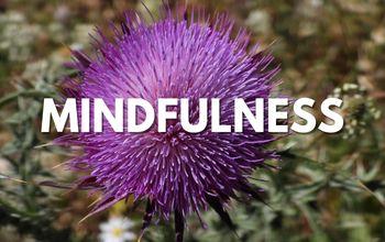 mindfulness-palestrina