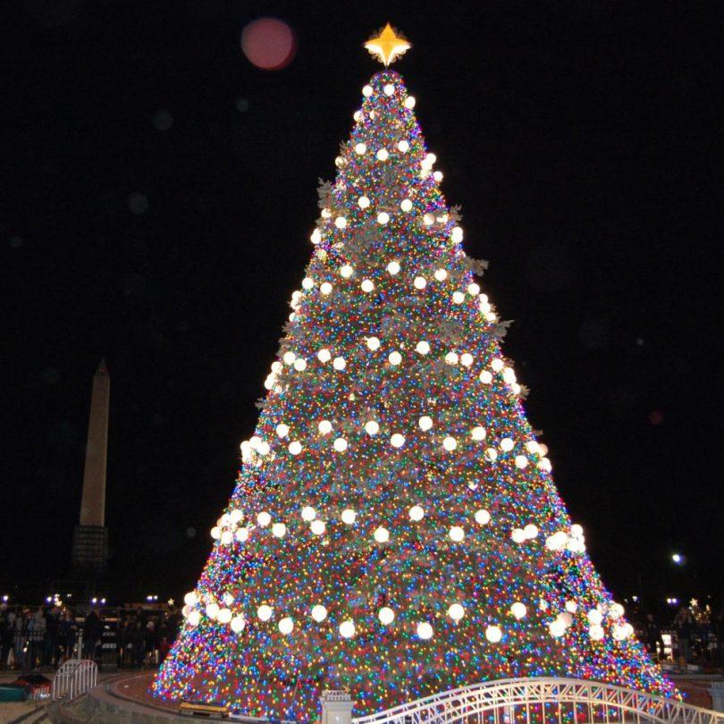 White House Best Photo Christmas Tree