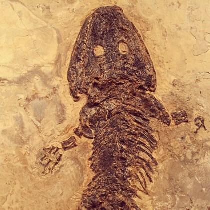 fossils 5