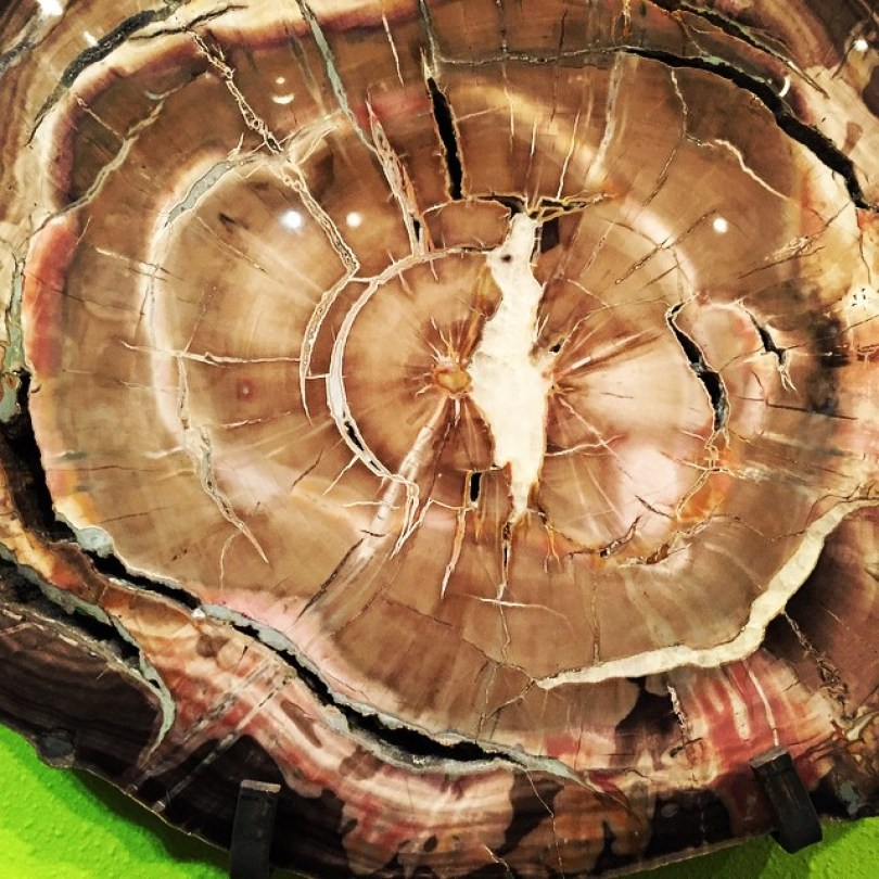 petrified wood 6