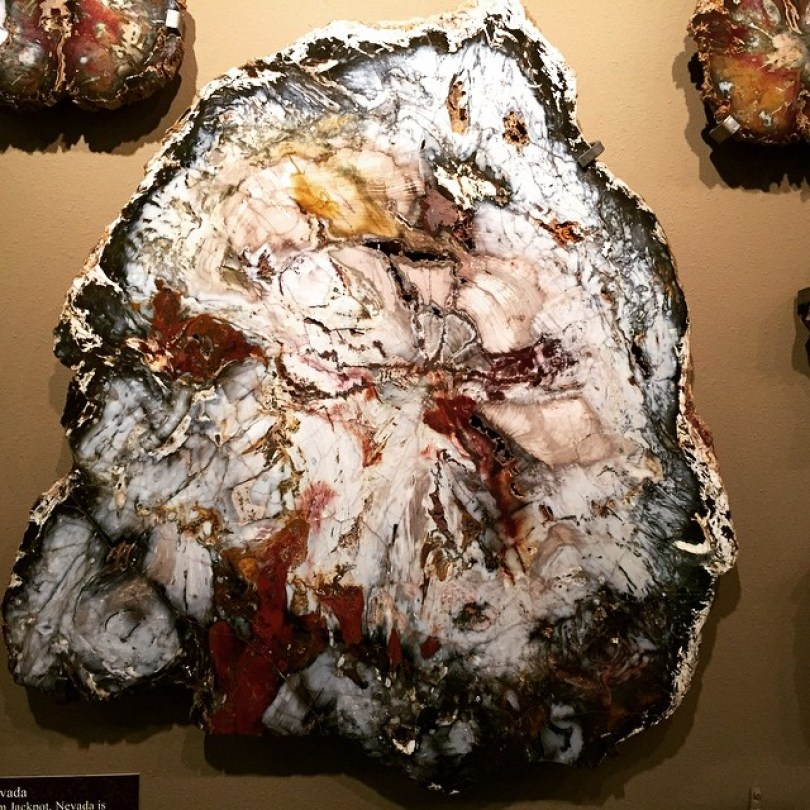 petrified wood 7