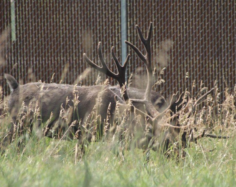 Bear Country USA Wildlife