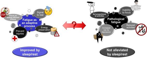 Role Inflammation Fatigue Figure 2