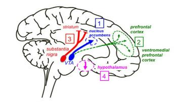 Cross-talk dopamine and innate immunity figure 2