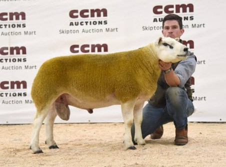 Photos Of The World's Most Expensive Sheep Purchased For $490,000