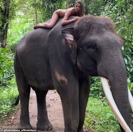 Instagram Influencer Receives Backlash After Posing Without Cloths Atop Endangered Elephant