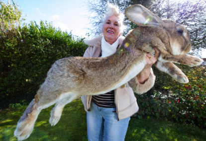 See Photos Of The 'World's Biggest Rabbit' Stolen From Its Owner's Home