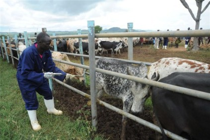 Federal Govt Shortlists 21 States For Pilot Grazing Reserves Initiative