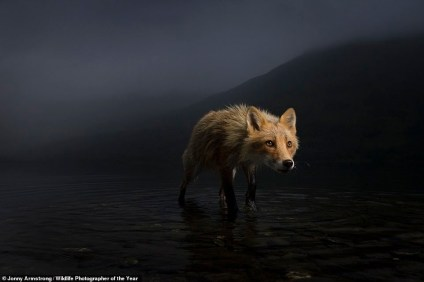 Stunning Images Submitted For The Wildlife Photographer Of The Year 2021 Competition