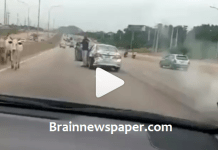 Watch The Moment Cows Caused Accident In Abuja