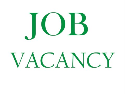 Job Vacancies For Young Writers
