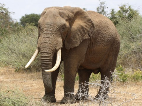 Interesting Facts About Elephants You Never Knew