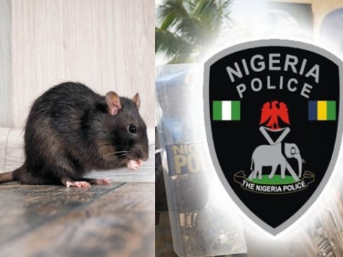 Police Reveals How Rats Ate Baby's Ear At Anambra Hospital