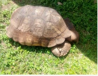 344-Year-Old Tortoise 'Alagba' Is Dead