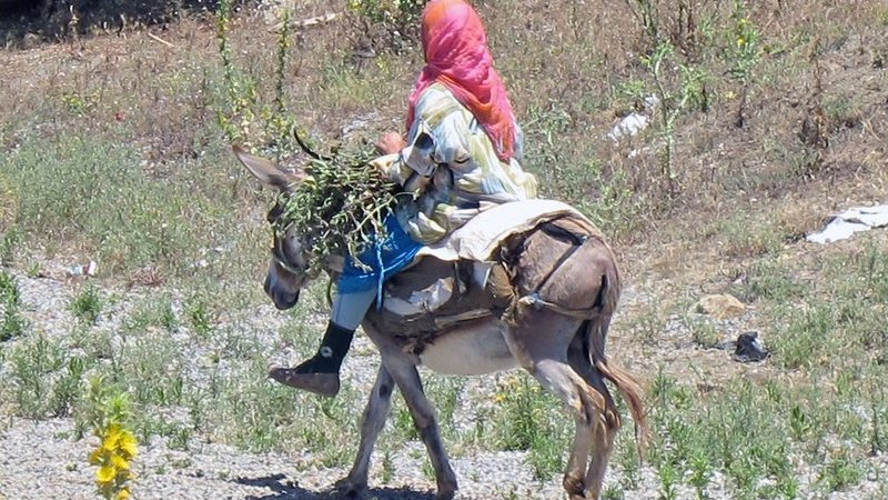 How Pregnant Women Are Being Conveyed To Hospitals On Donkeys In Bauchi