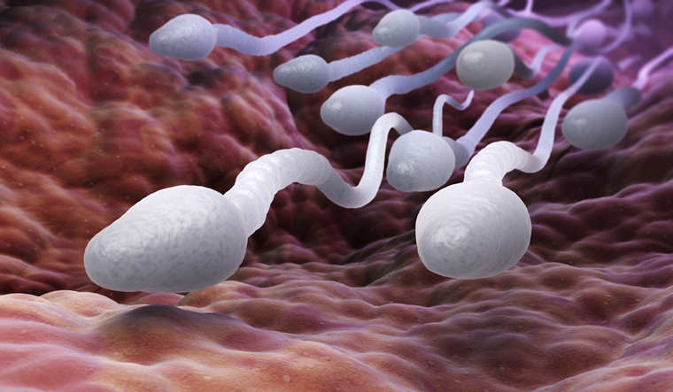 New Study Says Sperm Don't Really Swim But Spin