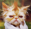 badhaircat1.jpg