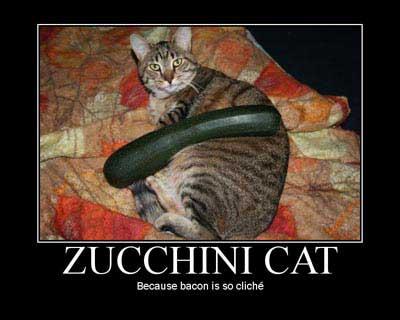 Zucchini Cat