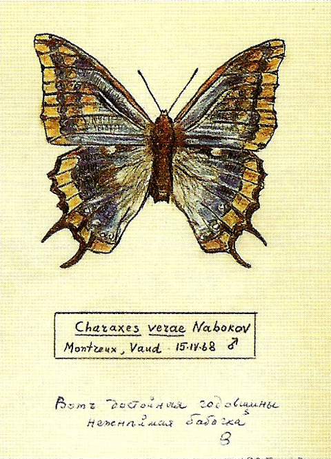 Nabokov's Legacy: Bequeathing Butterfly Theory – Brain Pickings