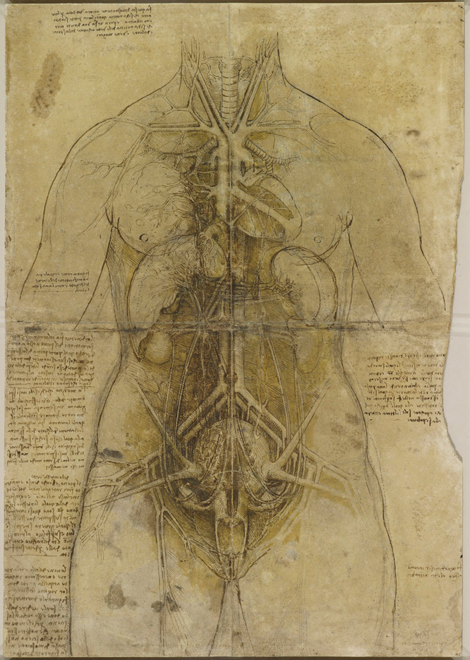 A Rare Glimpse Of Leonardo Da Vincis Anatomical Drawings Brain