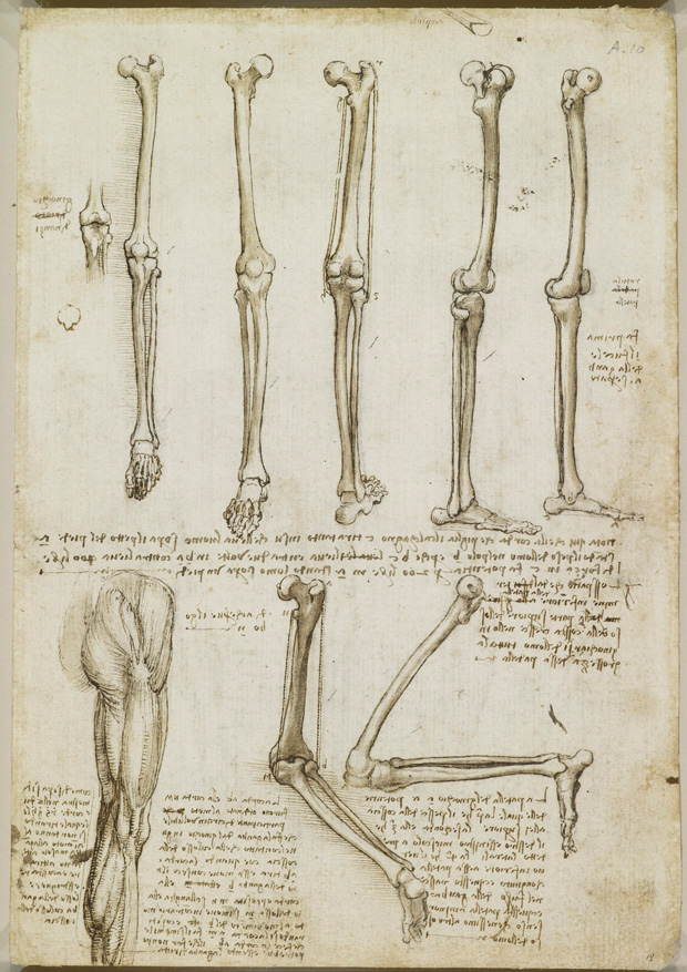 A Rare Glimpse of Leonardo da Vinci\'s Anatomical Drawings – Brain ...