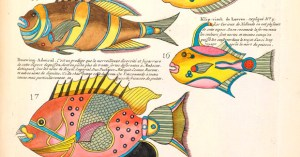 Natural Histories: 500 Years of Rare Scientific Illustrations from the American Museum of Natural History Archives