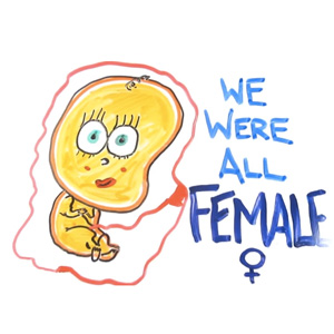 The Science of Why We Are All Female, Animated