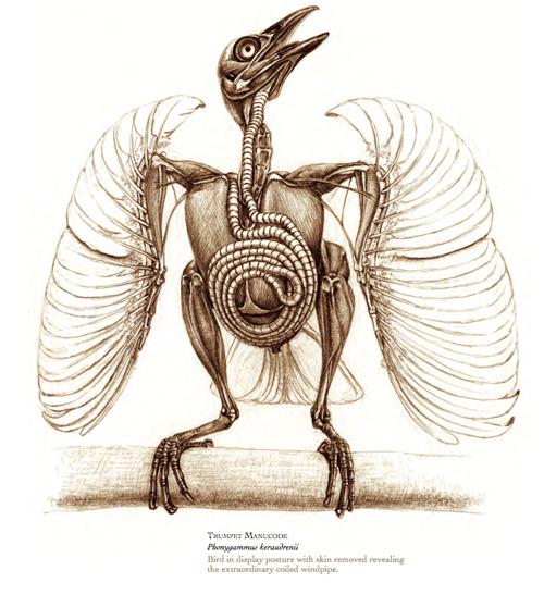 Avian brain anatomy