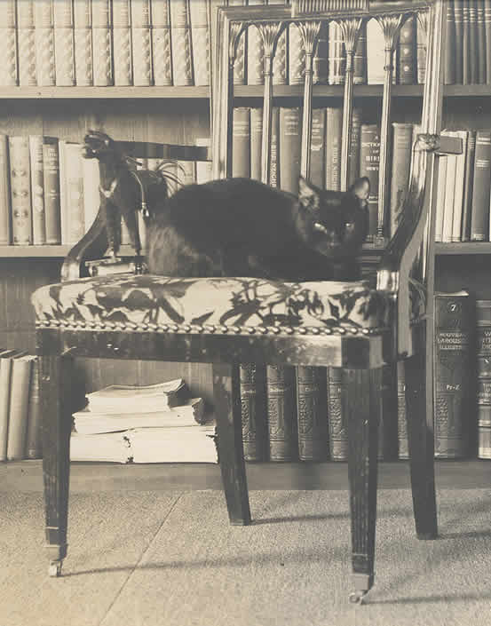Literary Pets: The Cats, Dogs, and Birds Famous Authors