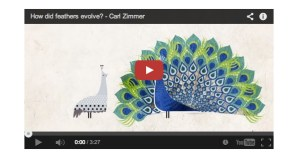 "A Miraculous ""Accident of Physics"": Carl Zimmer Explains How Feathers Evolved, Animated"