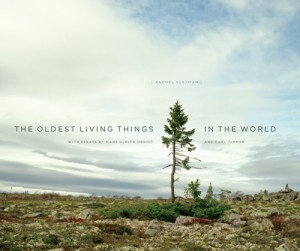 The World's Oldest Living Things: A Decade-Long Photographic Masterpiece at the Intersection of Art, Science, and Philosophy