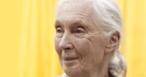 "Jane Goodall on Science and Spirit: The Iconic Primatologist Talks to Bill Moyers and Reads Her Poem ""The Old Wisdom"""