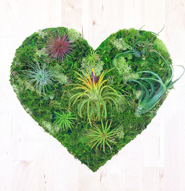 The Magic Of Moss And What It Teaches Us About The Art Of