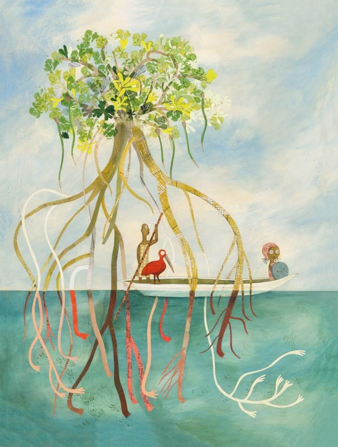 Walking Tree (red mangrove)
