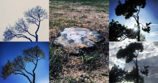 The Death of a Tree: A Eulogy for a Dear Friend