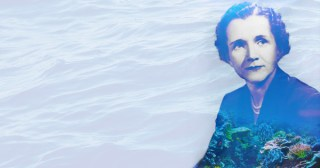 Undersea: Rachel Carson's Lyrical and Revolutionary 1937 Masterpiece Inviting Humans to Explore Earth from the Perspective of Other Creatures