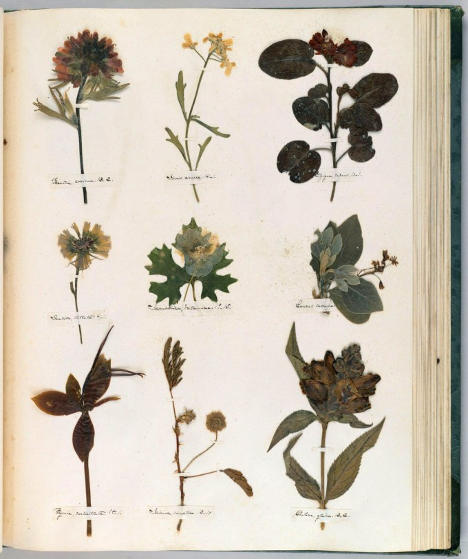 Emily Dickinson's Herbarium: A Forgotten Treasure at the Intersection of Science and Poetry