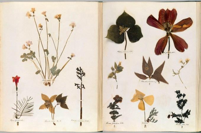 emilydickinson_herbarium000.jpg?resize=680%2C452