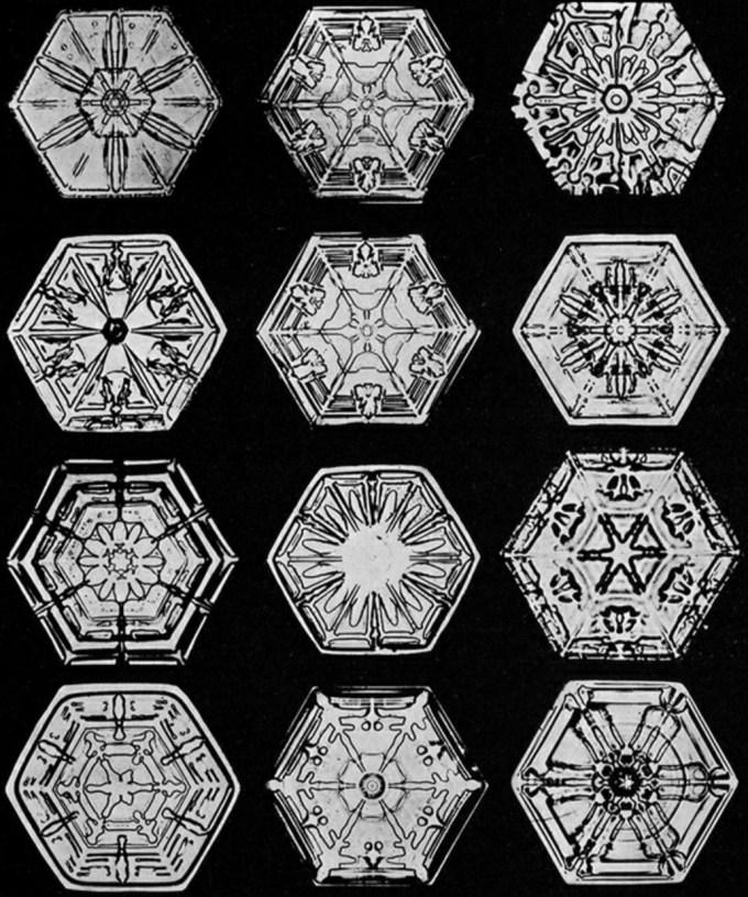 wilsonbentley_snowflakes3.jpg?resize=680%2C816
