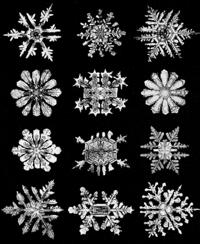 wilsonbentley_snowflakes8.jpg?resize=680%2C830