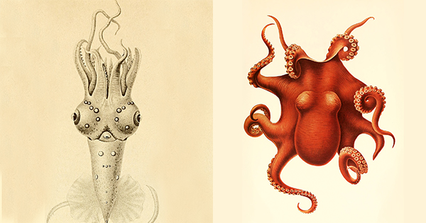 CephalopodAtlas0.jpg